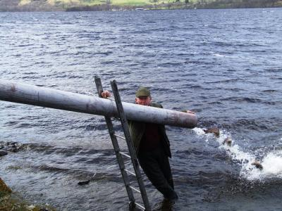 Brown Trout Stocking