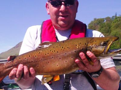 7lbs 11ozs Loch Earn Brown Trout